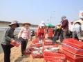 Giải đáp những khúc mắc giúp tiêu thụ hải sản đánh bắt an toàn