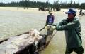Hà Tĩnh: Hải sản đánh bắt đều tiêu thụ hết nhưng giá còn thấp