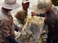 Vạch trần những thủ đoạn gian lận khi thu mua tôm tại Bạc Liêu