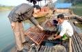 Vĩnh Lợi phát triển nghề nuôi cá lồng đặc sản