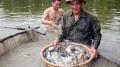 Nghệ An: Nuôi trồng thủy sản vượt chỉ tiêu đề ra