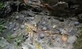 Vách đá 'đẻ trứng' ở Trung Quốc khiến giới khoa học bối rối