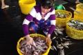 Ngư dân Rạch Gốc vào vụ cá khoai