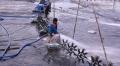 Hiệp hội tôm Thái Lan: Chất lượng tôm Thái Lan cao hơn so với tiêu chuẩn thế giới