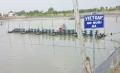 Bà Rịa - Vũng Tàu: Diện tích nuôi trồng thủy sản VietGAP còn ít