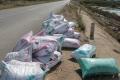 Khánh Hòa: 80ha ốc hương chết la liệt, đóng bao vứt đống bên đường