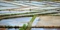 Cà Mau nuôi tôm công nghiệp đạt 15.000 ha vào năm 2020