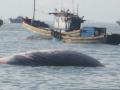 Phát hiện xác cá voi sáu tấn