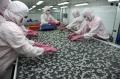 Thủy sản xuất khẩu vào Hàn Quốc gặp khó vì hàng rào kỹ thuật