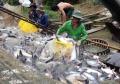 Xuất khẩu cá tra sang Trung Quốc tăng mạnh mừng hay lo?
