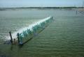 Một số mô hình xử lý nước thải nuôi tôm