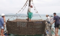 Chú ý xử lý môi trường tại các vùng nuôi thủy sản