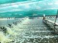 Thận trọng trong nuôi trồng thủy sản mùa mưa bão
