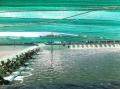 Bến Tre đẩy mạnh thu hút đầu tư thủy sản