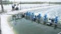 Sản xuất zeolite Cu2+ dùng trong xử lý nước nuôi tôm