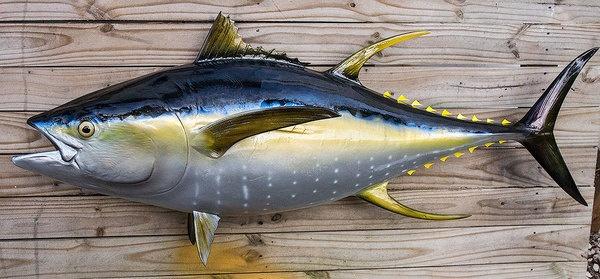 Cá ngừ vây vàng Thunnus albacares