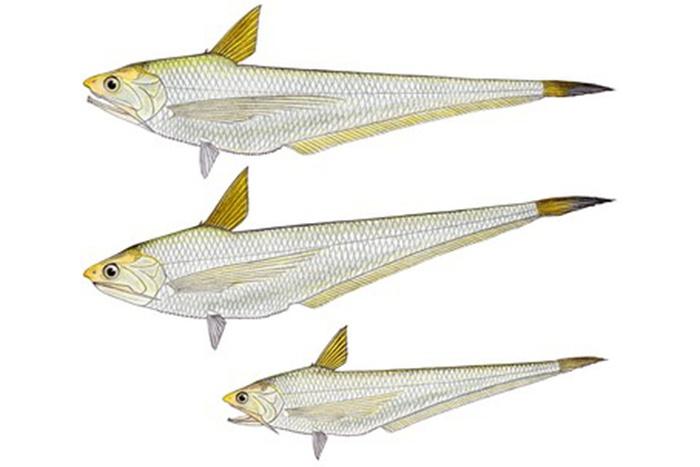 Cá Lành canh trắng