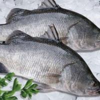 Cá chẽm tại chợ 1kg/con