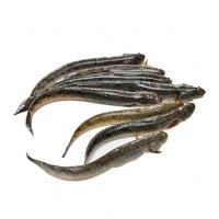 Cá kèo tại ao (40 con/kg)