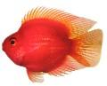 Cá không có tên khoa học chính thức